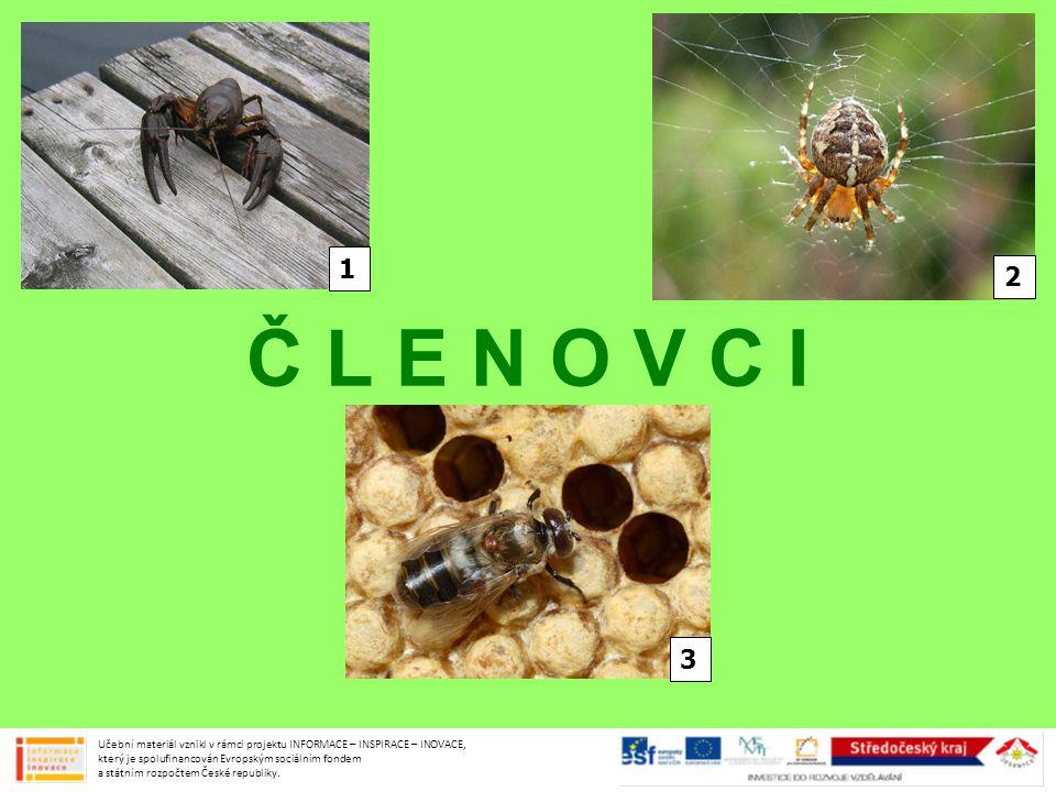 KLÍŠTĚ OBECNÉ samičky sají krev teplokrevným živočichům přenášejí zánět mozku a mozkových blan, borreliozu odstranění kápnout alkohol nebo jodovou tinkturu a pinzetou vyviklat z oplozeného vajíčka  larva (3 končetiny)  dospělec (4 končetiny) Učební materiál vznikl v rámci projektu INFORMACE – INSPIRACE – INOVACE, který je spolufinancován Evropským sociálním fondem a státním rozpočtem České republiky.