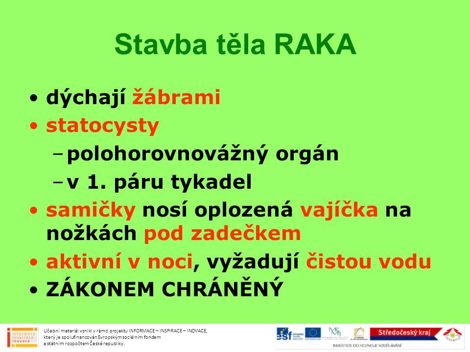 Původní druhy raků RAK ŘÍČNÍ RAK KAMENÁČ Učební materiál vznikl v rámci projektu INFORMACE – INSPIRACE – INOVACE, který je spolufinancován Evropským sociálním fondem a státním rozpočtem České republiky.