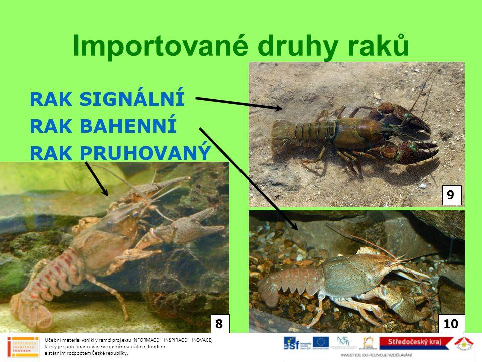 Mořské druhy Učební materiál vznikl v rámci projektu INFORMACE – INSPIRACE – INOVACE, který je spolufinancován Evropským sociálním fondem a státním rozpočtem České republiky.