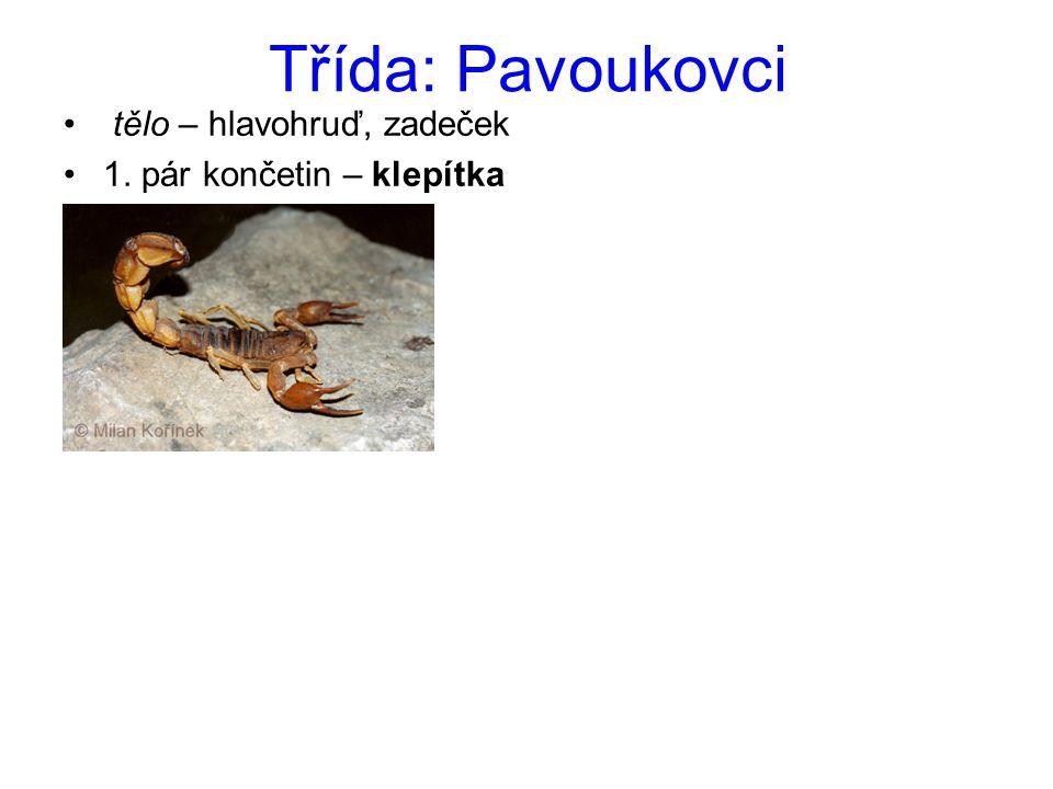 Řád: Pavouci Pokoutník domácí tělo = hlavohruď a zadeček na hlavohrudi: jednoduchá očka ústní ústrojí (klepítka, makadla) 4 páry článkovaných kráčivých noh stopka – mezi hlavohrudí a zadečkem na zadečku – snovací bradavky – tvorba vlákna podle typu pavučin lze určit rod pavouka