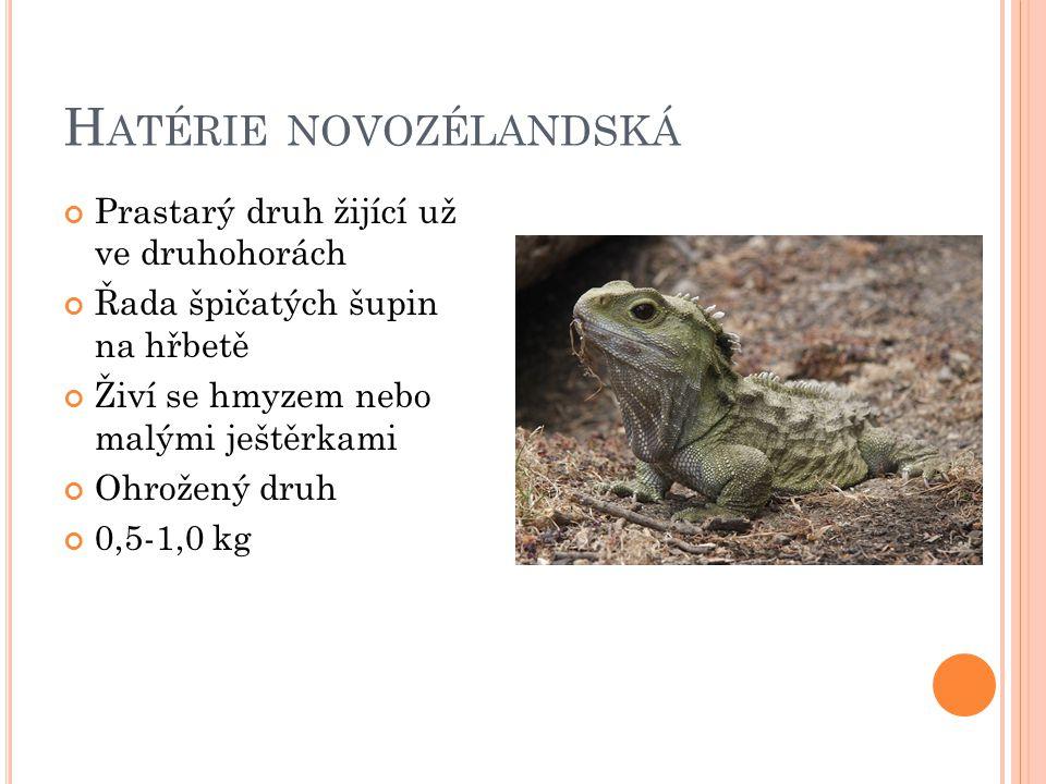 H ATÉRIE NOVOZÉLANDSKÁ Prastarý druh žijící už ve druhohorách Řada špičatých šupin na hřbetě Živí se hmyzem nebo malými ještěrkami Ohrožený druh 0,5-1