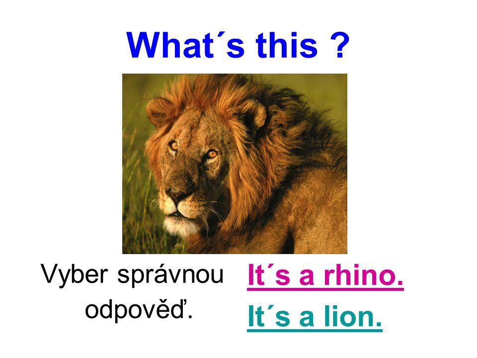 What´s this ? Vyber správnou odpověď. It´s a rhino. It´s a lion.