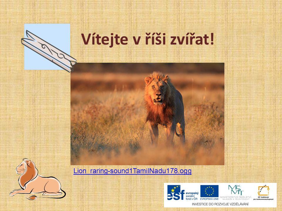 Vítejte v říši zvířat! Lion_raring-sound1TamilNadu178.ogg