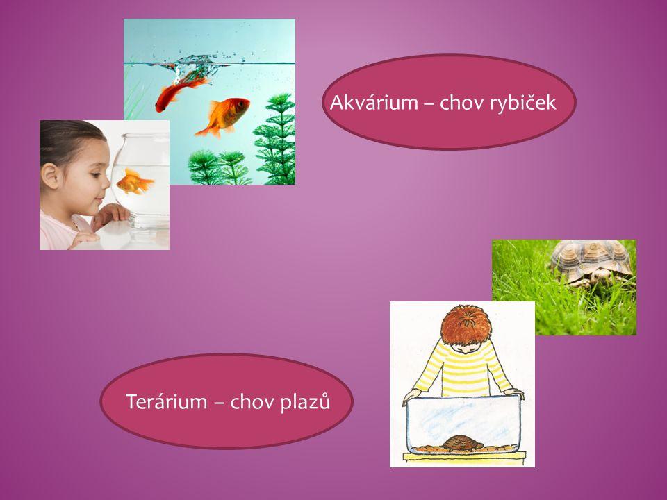 Akvárium – chov rybiček Terárium – chov plazů