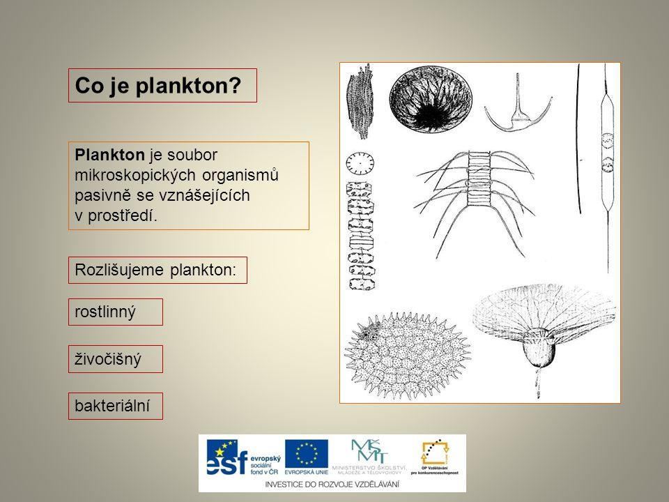 Co je plankton? Plankton je soubor mikroskopických organismů pasivně se vznášejících v prostředí. rostlinný Rozlišujeme plankton: živočišný bakteriáln