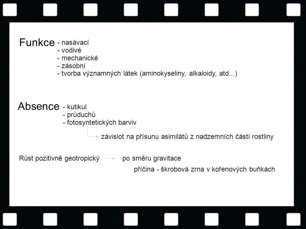 © Letohradské soukromé gymnázium o.p.s. Funkce - nasávací - vodivé - mechanické - zásobní - tvorba významných látek (aminokyseliny, alkaloidy, atd...)