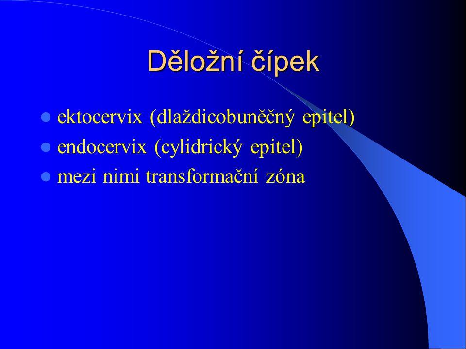 Děložní čípek ektocervix (dlaždicobuněčný epitel) endocervix (cylidrický epitel) mezi nimi transformační zóna