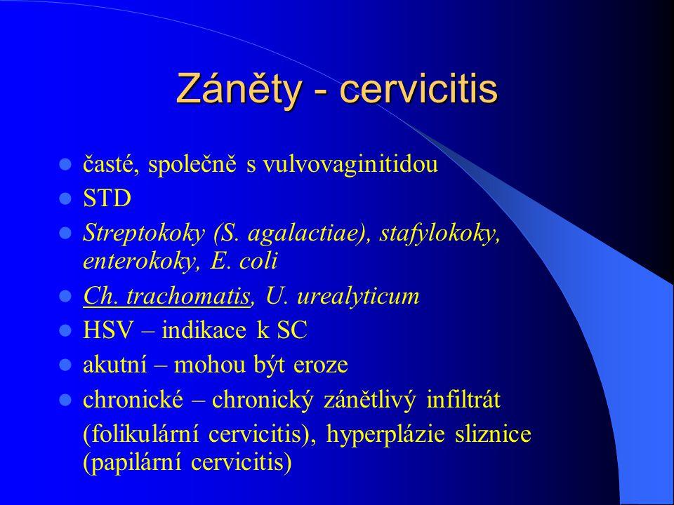 Záněty - cervicitis časté, společně s vulvovaginitidou STD Streptokoky (S. agalactiae), stafylokoky, enterokoky, E. coli Ch. trachomatis, U. urealytic