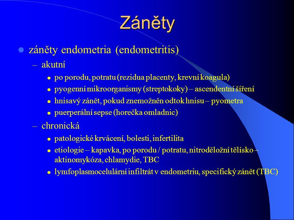 Záněty záněty endometria (endometritis) – akutní po porodu, potratu (rezidua placenty, krevní koagula) pyogenní mikroorganismy (streptokoky) – ascendentní šíření hnisavý zánět, pokud znemožněn odtok hnisu – pyometra puerperální sepse (horečka omladnic) – chronická patologické krvácení, bolesti, infertilita etiologie – kapavka, po porodu / potratu, nitroděložní tělísko – aktinomykóza, chlamydie, TBC lymfoplasmocelulární infiltrát v endometriu, specifický zánět (TBC)