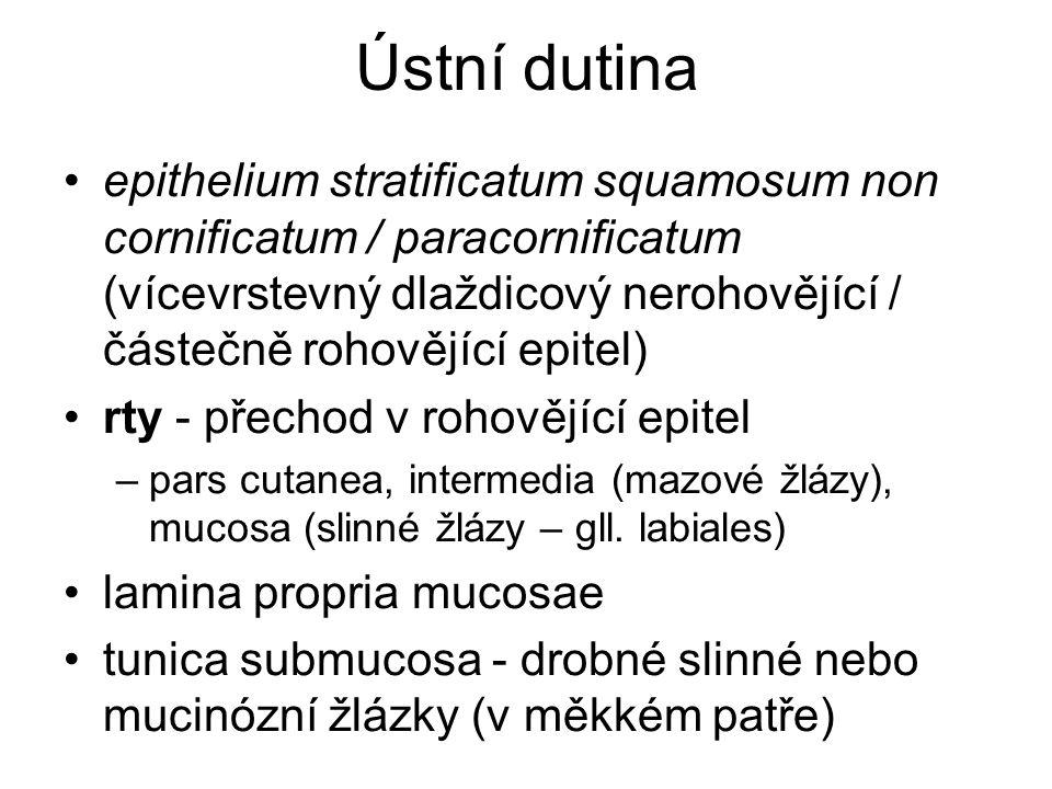 Hltan = Pharynx 2.
