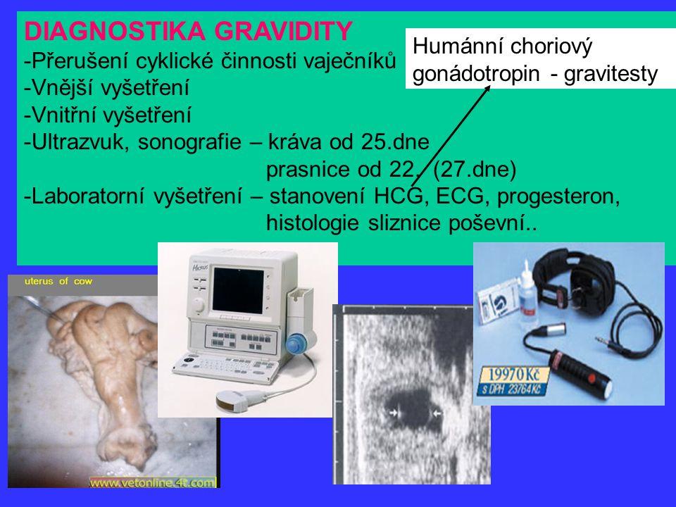 DIAGNOSTIKA GRAVIDITY -Přerušení cyklické činnosti vaječníků -Vnější vyšetření -Vnitřní vyšetření -Ultrazvuk, sonografie – kráva od 25.dne prasnice od