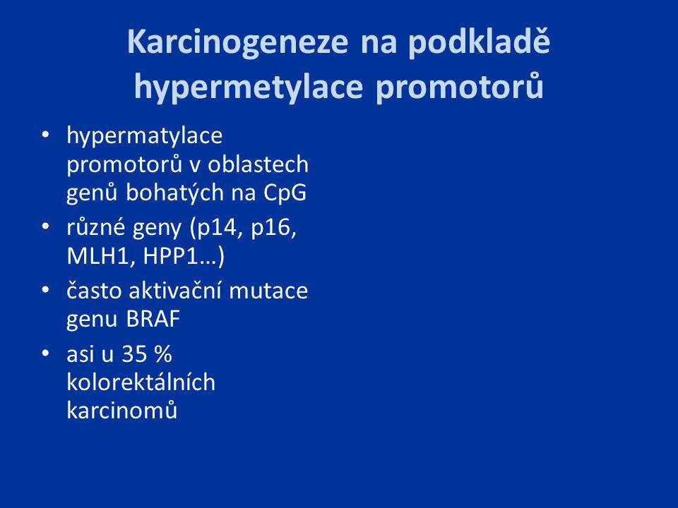 Karcinogeneze na podkladě hypermetylace promotorů hypermatylace promotorů v oblastech genů bohatých na CpG různé geny (p14, p16, MLH1, HPP1…) často ak