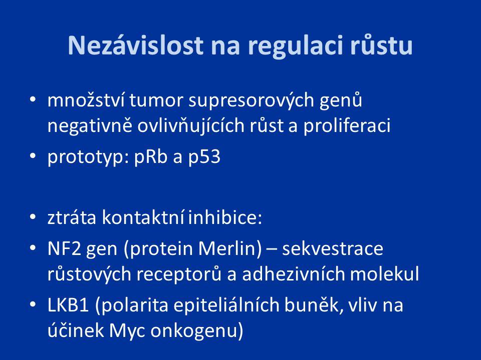 Nezávislost na regulaci růstu množství tumor supresorových genů negativně ovlivňujících růst a proliferaci prototyp: pRb a p53 ztráta kontaktní inhibi