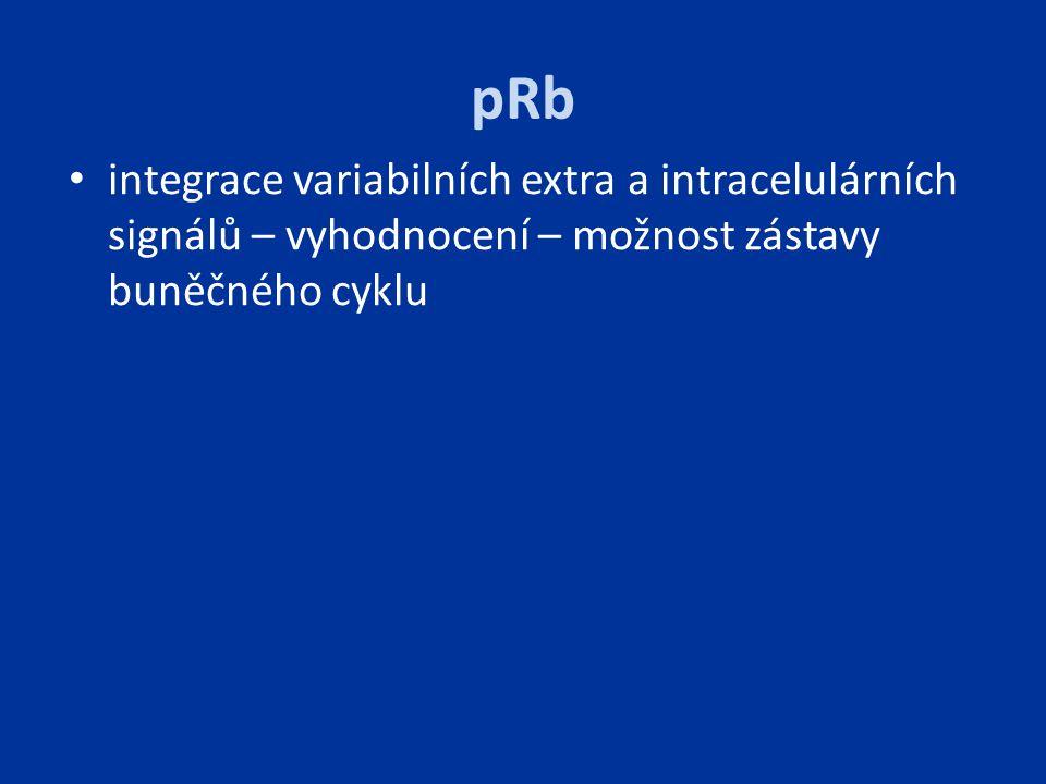 pRb integrace variabilních extra a intracelulárních signálů – vyhodnocení – možnost zástavy buněčného cyklu