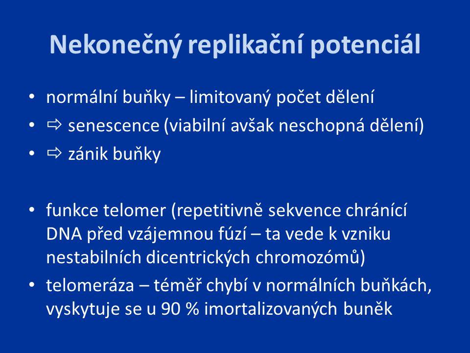 Nekonečný replikační potenciál normální buňky – limitovaný počet dělení  senescence (viabilní avšak neschopná dělení)  zánik buňky funkce telomer (r
