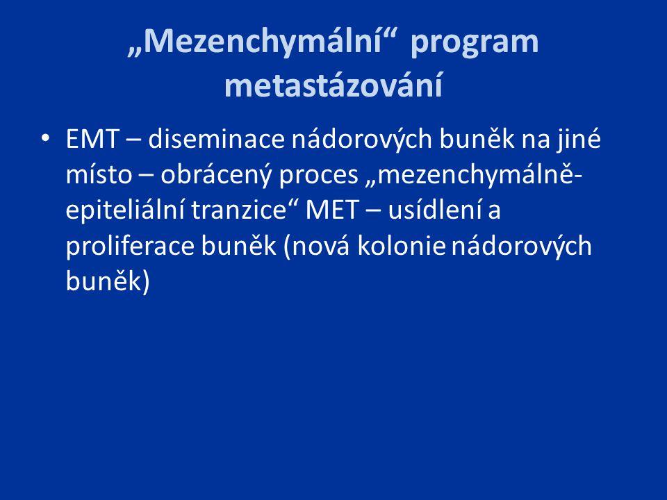 """""""Mezenchymální"""" program metastázování EMT – diseminace nádorových buněk na jiné místo – obrácený proces """"mezenchymálně- epiteliální tranzice"""" MET – us"""