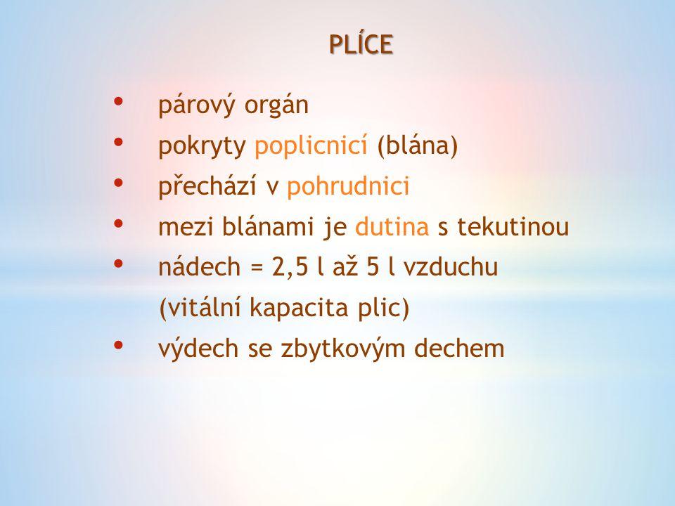 PLÍCE párový orgán pokryty poplicnicí (blána) přechází v pohrudnici mezi blánami je dutina s tekutinou nádech = 2,5 l až 5 l vzduchu (vitální kapacita plic) výdech se zbytkovým dechem