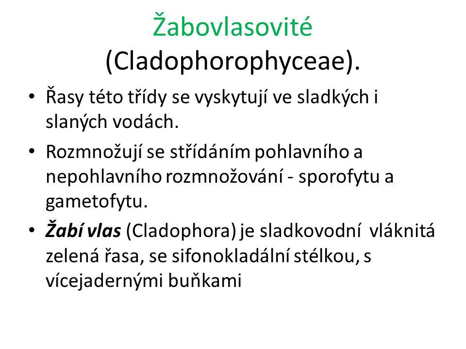 Žabovlasovité (Cladophorophyceae). Řasy této třídy se vyskytují ve sladkých i slaných vodách. Rozmnožují se střídáním pohlavního a nepohlavního rozmno