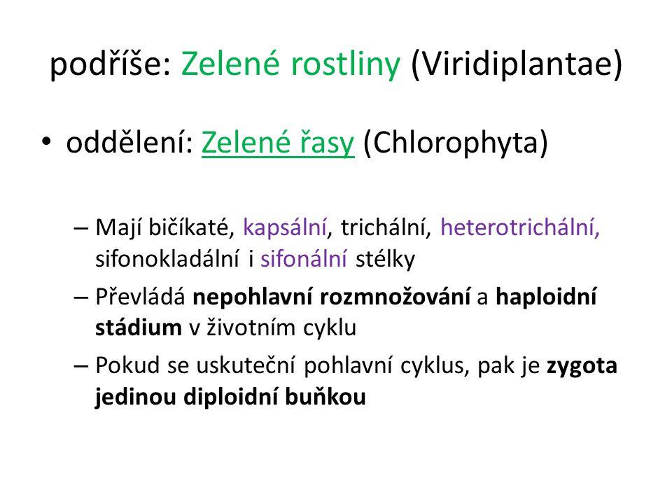 podříše: Zelené rostliny (Viridiplantae) oddělení: Zelené řasy (Chlorophyta) – Mají bičíkaté, kapsální, trichální, heterotrichální, sifonokladální i s