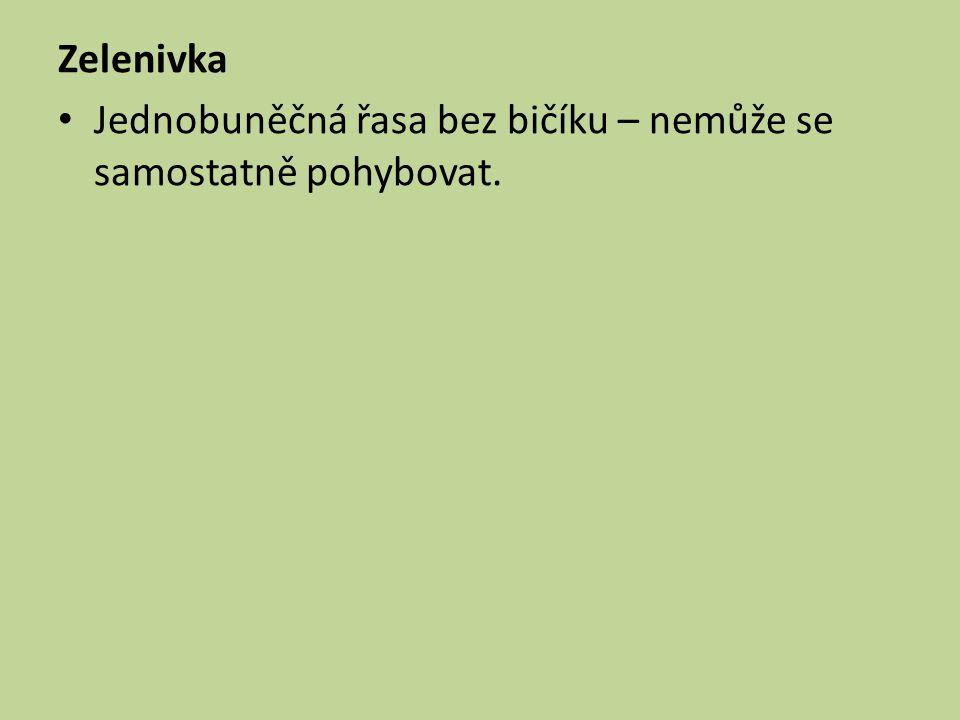 Zelenivka Jednobuněčná řasa bez bičíku – nemůže se samostatně pohybovat.