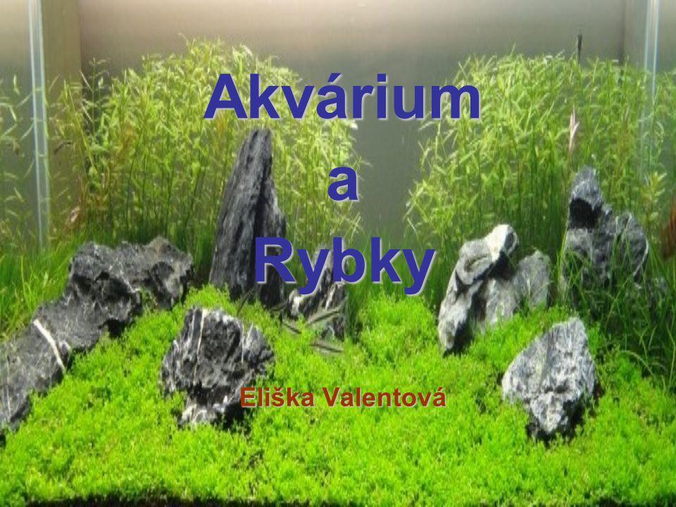 AkváriumaRybky Eliška Valentová