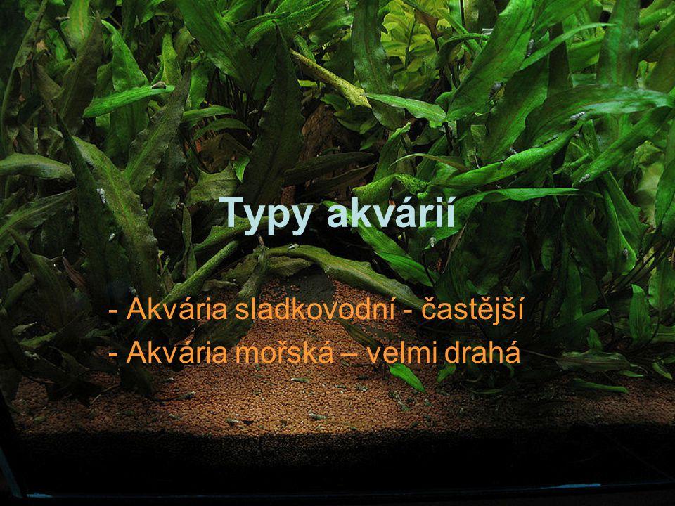Typy akvárií - Akvária sladkovodní - častější - Akvária mořská – velmi drahá