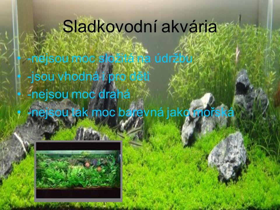 Nejčastěji chované rybky Neonka obecná závojnatka čínská bojovnice pestrá skalára amazonská živorodka duhová (paví očko)