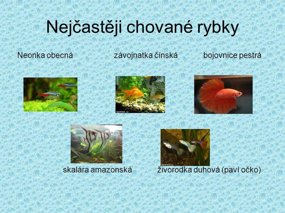 Rybí nemoci krupička rozpad ploutví vodnatelnost sametka
