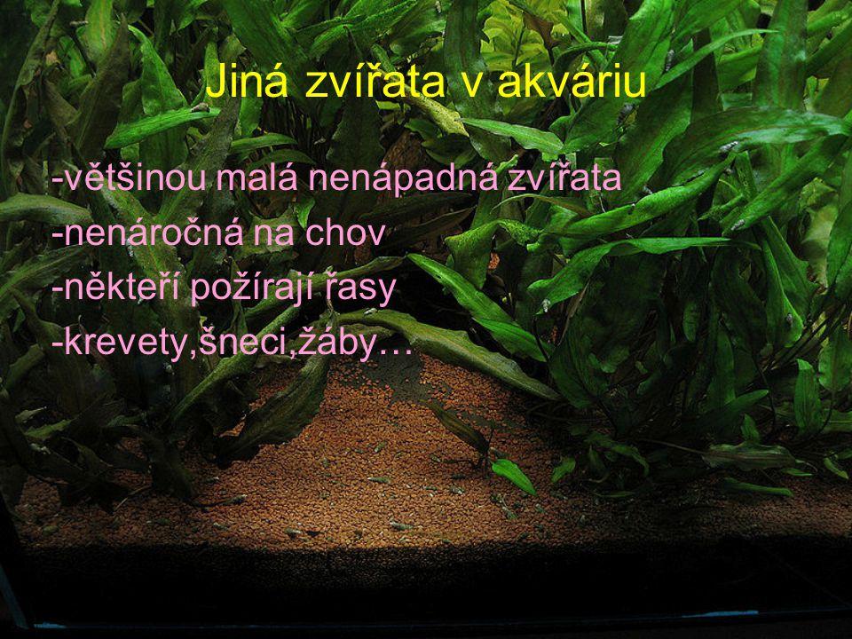 Jiná zvířata v akváriu -většinou malá nenápadná zvířata -nenáročná na chov -někteří požírají řasy -krevety,šneci,žáby…