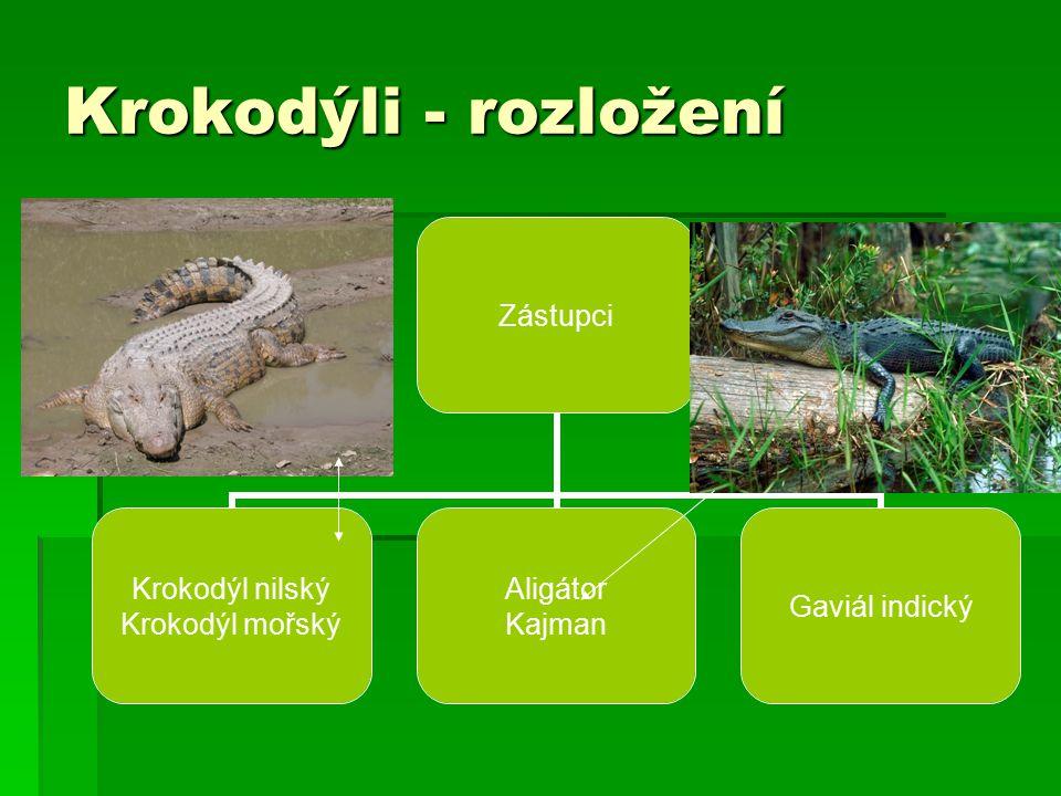 Výskyt krokodýlů v jednotlivých světadílech  Austrálie – Krokodýl mořský – největší  Amerika – Kajman  Aligátor severoamerický  Krokodýl orinocký  Afrika – Krokodýl nilský – 6 m 1 tuna  Krokodýl čelnatý – nejmenší 120 cm  Asie – Gaviál indický  Krokodýl mořský