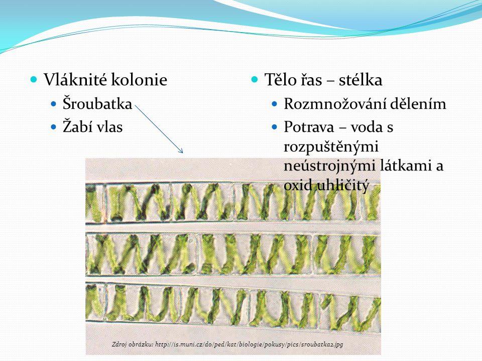 Vláknité kolonie Šroubatka Žabí vlas Tělo řas – stélka Rozmnožování dělením Potrava – voda s rozpuštěnými neústrojnými látkami a oxid uhličitý Zdroj o
