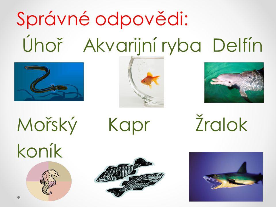 Správné odpovědi: Úhoř Akvarijní ryba Delfín Mořský Kapr Žralok koník