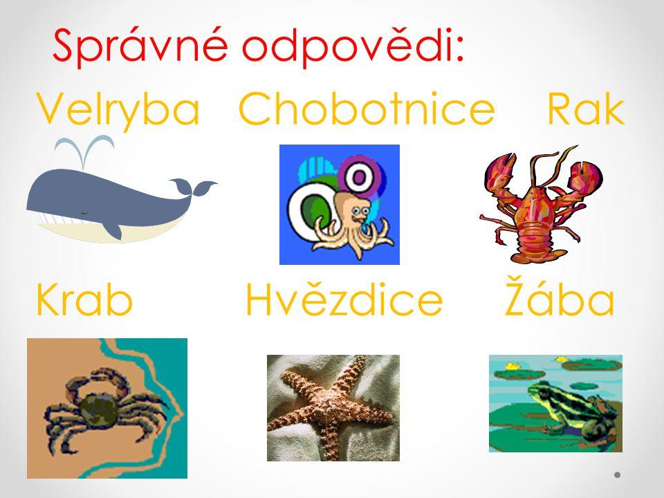 Správné odpovědi: Velryba Chobotnice Rak Krab Hvězdice Žába