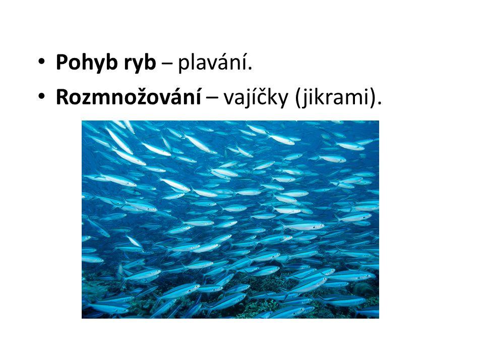 Pohyb ryb – plavání. Rozmnožování – vajíčky (jikrami).