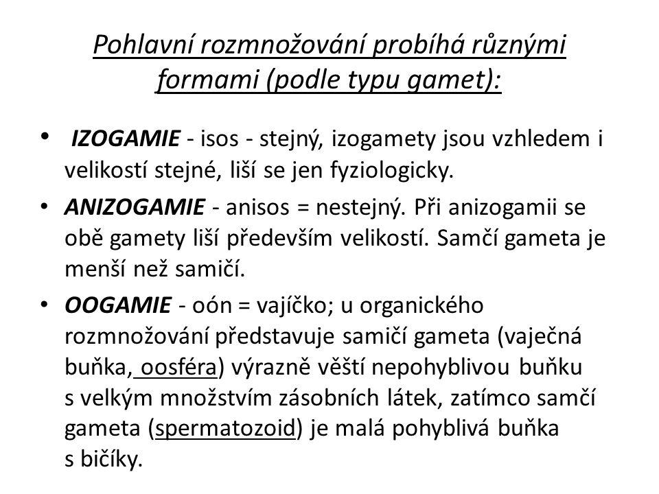 Pohlavní rozmnožování probíhá různými formami (podle typu gamet): IZOGAMIE - isos - stejný, izogamety jsou vzhledem i velikostí stejné, liší se jen fy