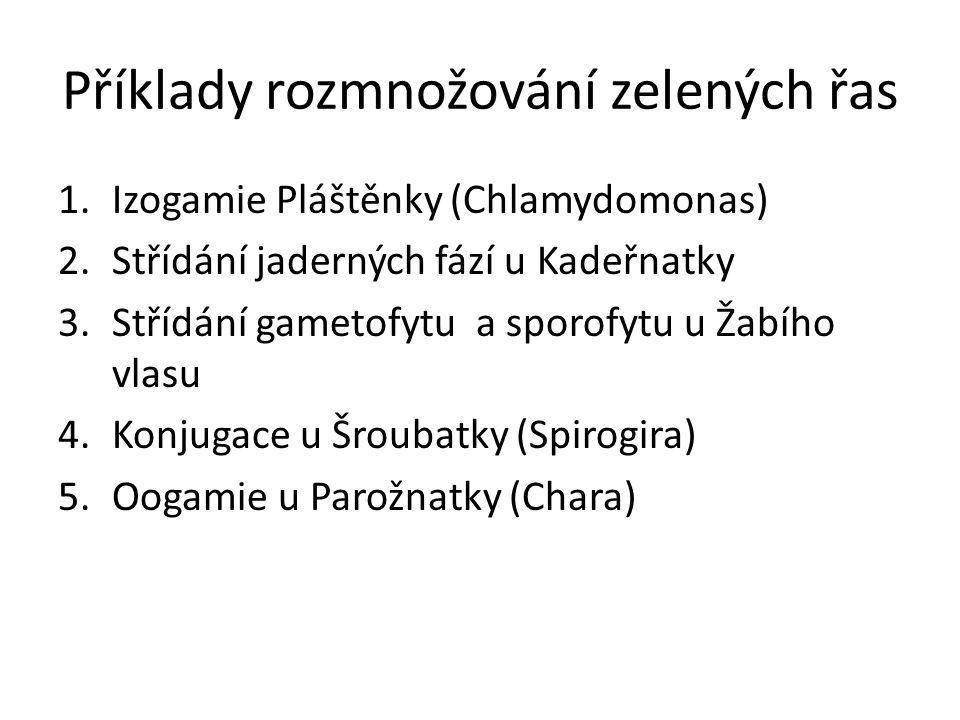 Příklady rozmnožování zelených řas 1.Izogamie Pláštěnky (Chlamydomonas) 2.Střídání jaderných fází u Kadeřnatky 3.Střídání gametofytu a sporofytu u Žabího vlasu 4.Konjugace u Šroubatky (Spirogira) 5.Oogamie u Parožnatky (Chara)