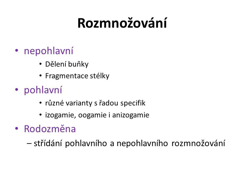 Rozmnožování nepohlavní Dělení buňky Fragmentace stélky pohlavní různé varianty s řadou specifik izogamie, oogamie i anizogamie Rodozměna – střídání p