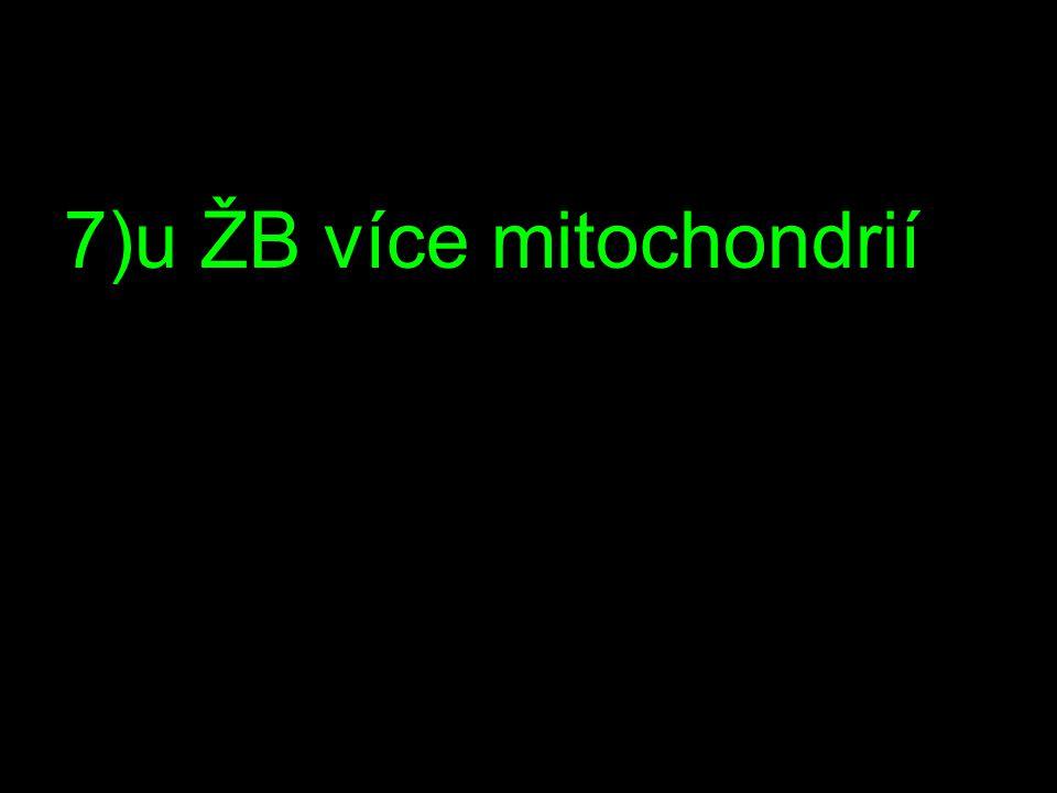 7)u ŽB více mitochondrií