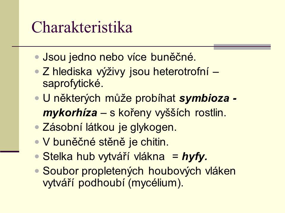 Charakteristika Jsou jedno nebo více buněčné. Z hlediska výživy jsou heterotrofní – saprofytické.