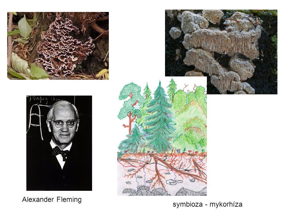 Alexander Fleming symbioza - mykorhíza