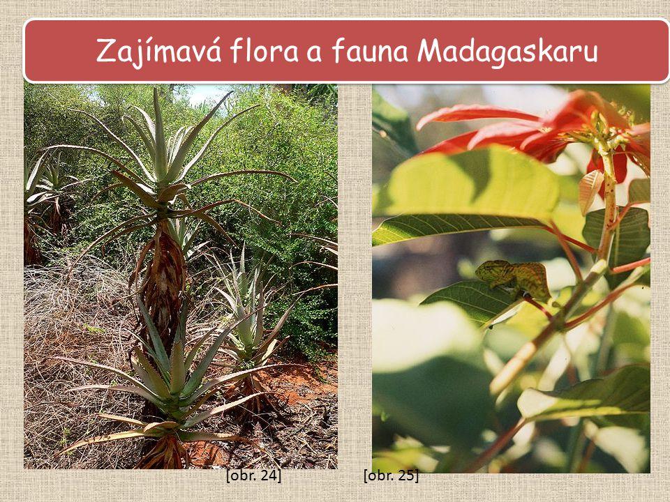 Zajímavá flora a fauna Madagaskaru [obr. 24][obr. 25]