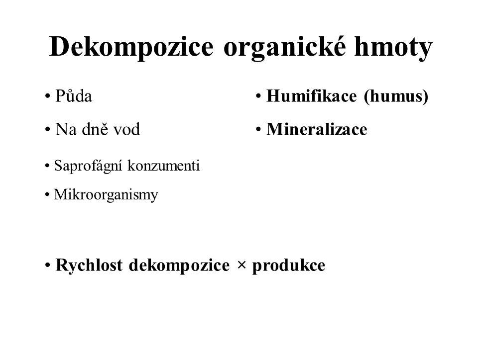 Dekompozice organické hmoty Půda Na dně vod Saprofágní konzumenti Mikroorganismy Humifikace (humus) Mineralizace Rychlost dekompozice × produkce
