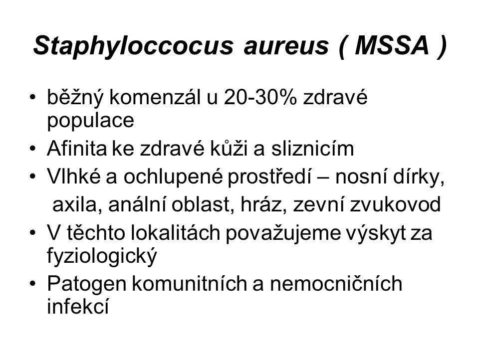 Staphyloccocus aureus ( MSSA ) běžný komenzál u 20-30% zdravé populace Afinita ke zdravé kůži a sliznicím Vlhké a ochlupené prostředí – nosní dírky, a