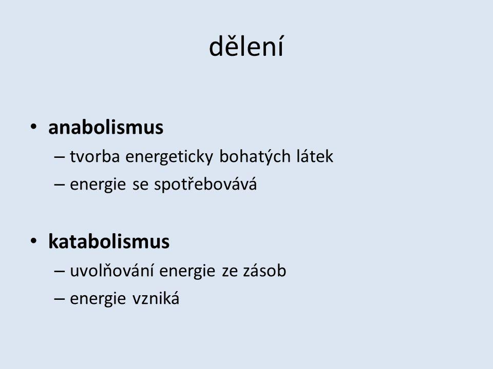dělení anabolismus – tvorba energeticky bohatých látek – energie se spotřebovává katabolismus – uvolňování energie ze zásob – energie vzniká