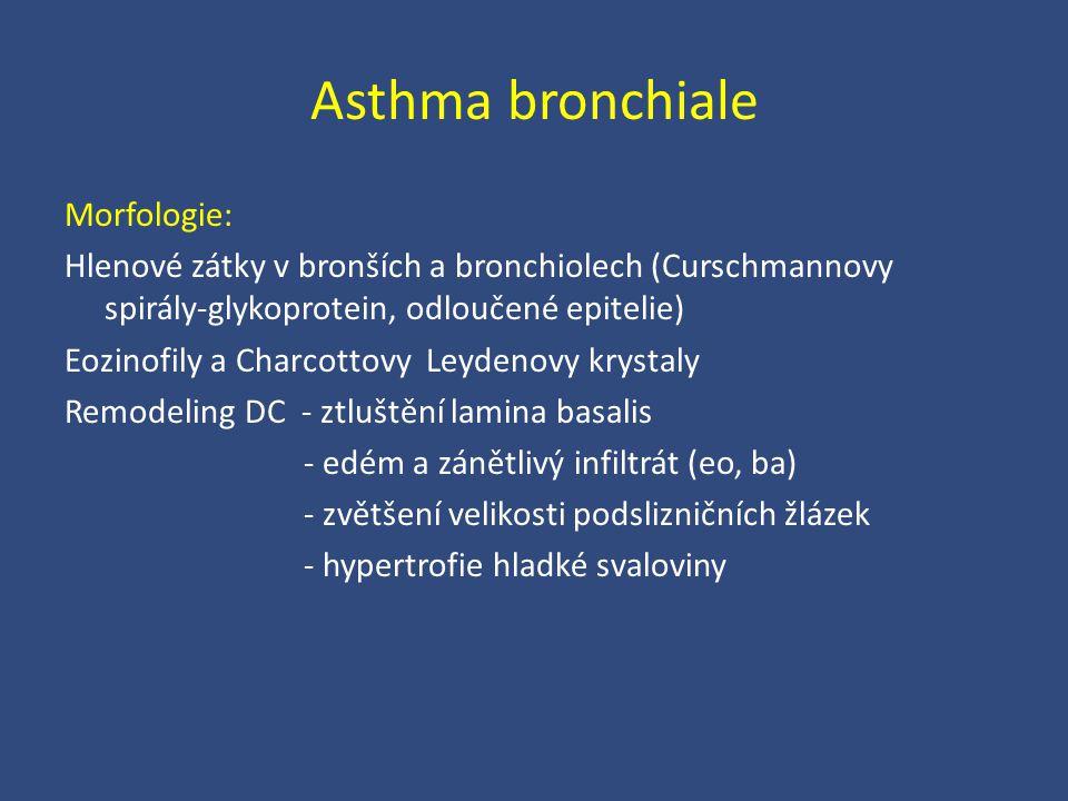 Asthma bronchiale Morfologie: Hlenové zátky v bronších a bronchiolech (Curschmannovy spirály-glykoprotein, odloučené epitelie) Eozinofily a Charcottov