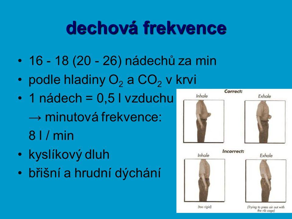 dechová frekvence 16 - 18 (20 - 26) nádechů za min podle hladiny O 2 a CO 2 v krvi 1 nádech = 0,5 l vzduchu → minutová frekvence: 8 l / min kyslíkový