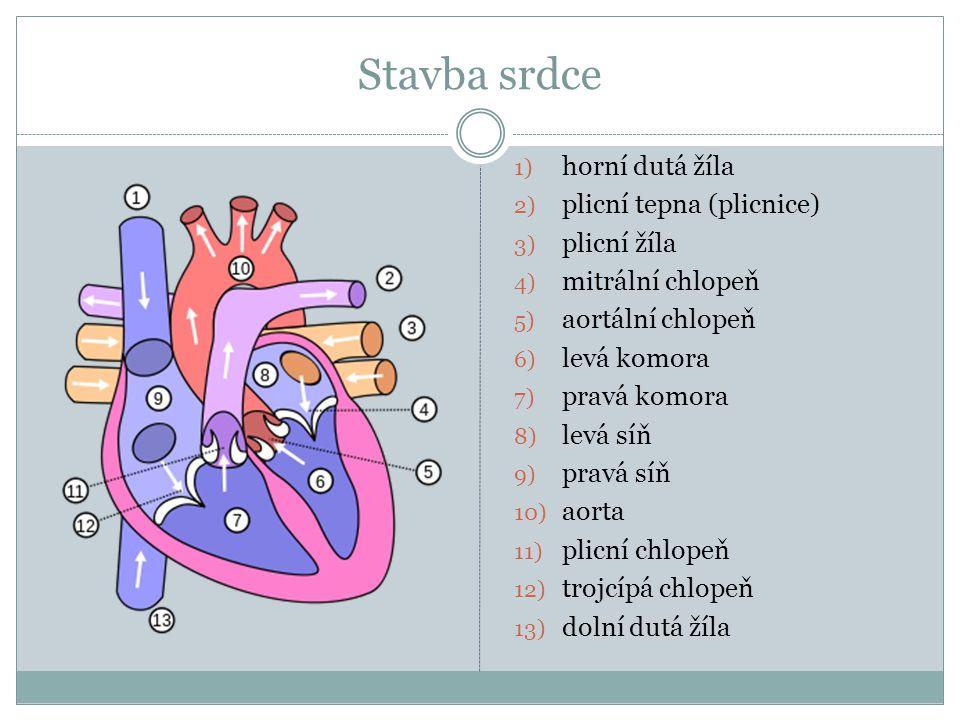 Oběh krve Z levé komory je okysličená krev vypuzována do celého těla aortou.