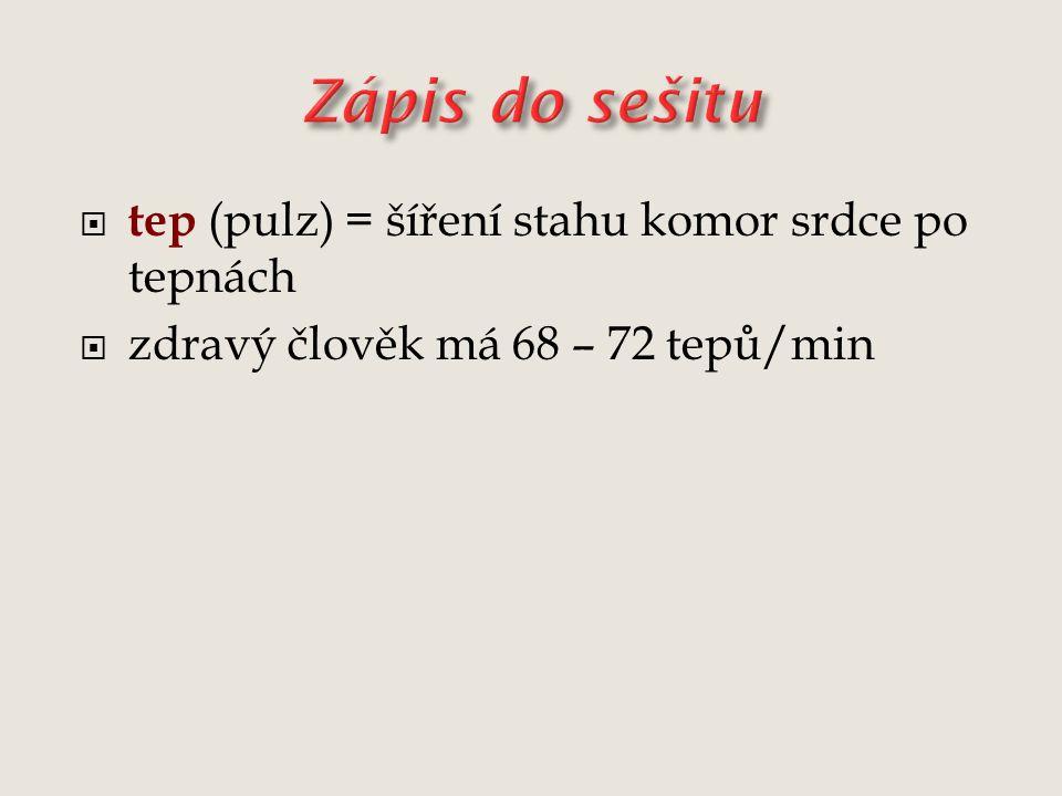  tep (pulz) = šíření stahu komor srdce po tepnách  zdravý člověk má 68 – 72 tepů/min