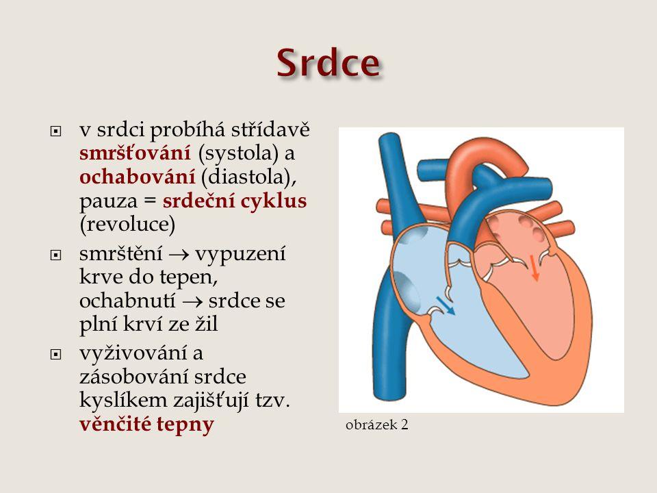  v srdci probíhá střídavě smršťování (systola) a ochabování (diastola), pauza = srdeční cyklus (revoluce)  smrštění  vypuzení krve do tepen, ochabn