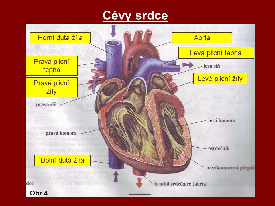 Cévy srdce Pravé plicní žíly Pravá plicní tepna Aorta Levá plicní tepna Levé plicní žíly Dolní dutá žíla Horní dutá žíla Obr.4